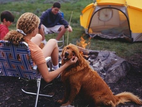 Tips on Camping with Dogs